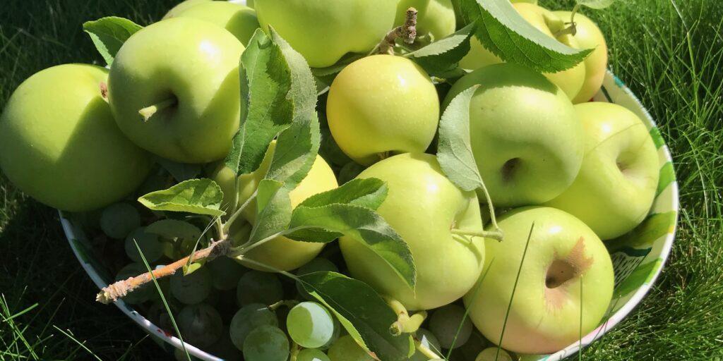 Seasonal Fruits from Utah